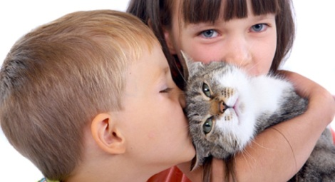 339546.pisica-home